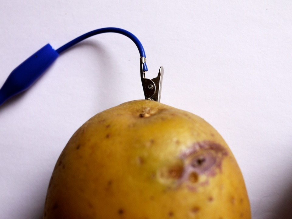 potato_connection